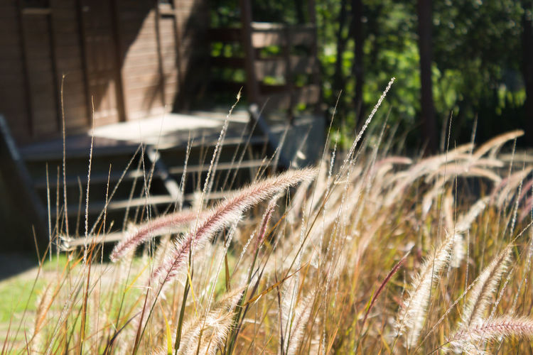 Cacthing The Wind Field Grass Nature Outdoor Photography Plant Selective Focus Sunday Afternoon Urban Spring Fever
