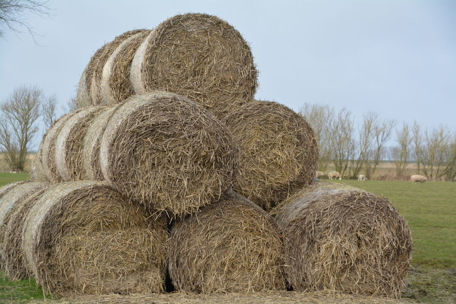 Agriculture Bale  Clear Sky Day Farm Field Grass Growth Harvesting Hay Landscape Nature No People Rolled Up Rural Scene Sky Stack Tranquil Scene Tranquility Tree