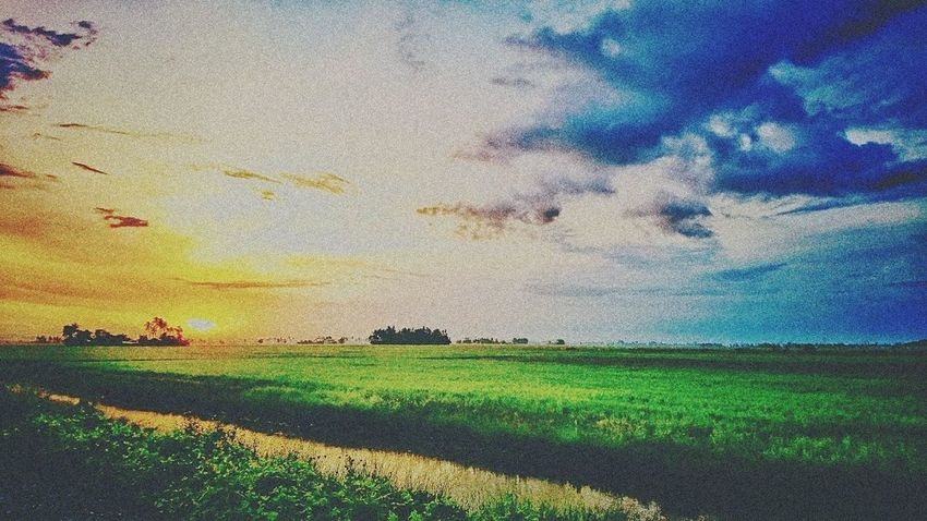 Agriculture Rice Paddy Cloud - Sky Outdoors Multi Colored At Alor Setar Malaysia Sony Xperia Z5 Rice Field