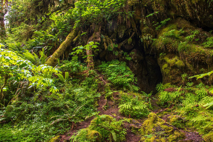 Hidden Mine Grotto Green Color Mine Shaft Moss & Lichen Olympic National Park Beauty In Nature Day Fern Ferns Foliage Forest Green Color Greenery Growth Hidden Beauty Land Lush Foliage Moss Nature No People Outdoors Plant Rock Scenics - Nature Tranquility Tree
