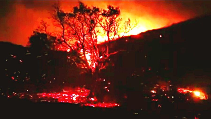 Burning Tree Burning Forest