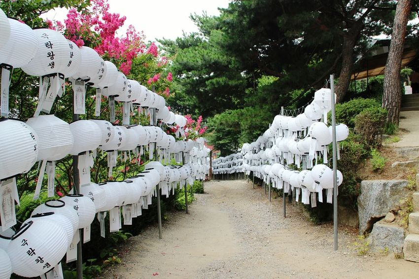 Alley of wishes Bongeunsa 봉은사 Seoul Korea South Korea Temple Lanterns Alleyway Summer Tempel Laternen Sommer Weg EyeEmNewHere No People In A Row White Color Tree Day Outdoors Nature