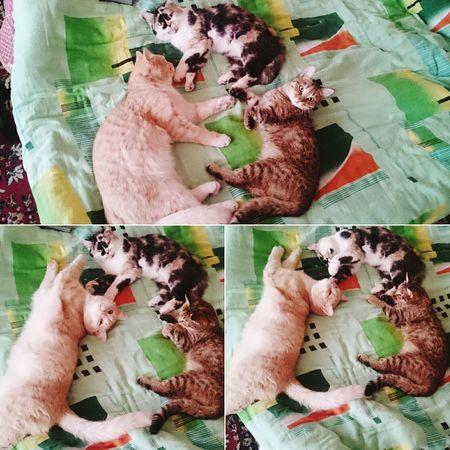 Cats 🐱 My Cats Cats Of EyeEm Amimals Deep Sleep