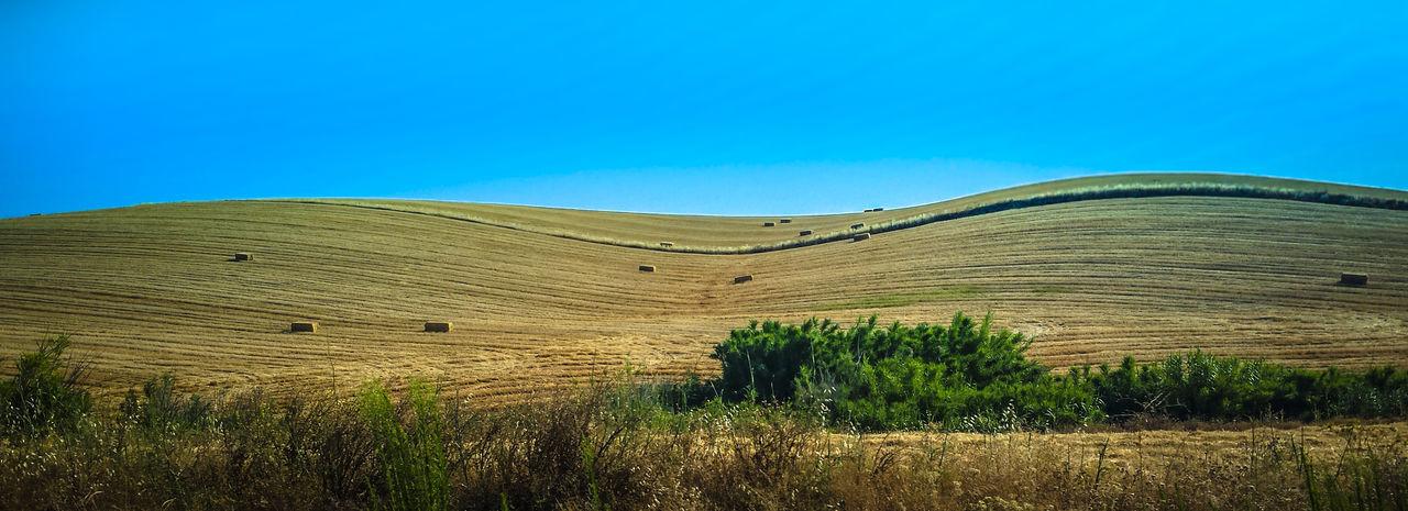 """""""Tan pobre como es la mesa que carece de pan, así la vida más ejemplar resulta vacía si le falta amor"""" — Antonio de Padua Linares Trigal Trigales Trigo Wheat Wheat Field Wheatfield Wheatfields"""