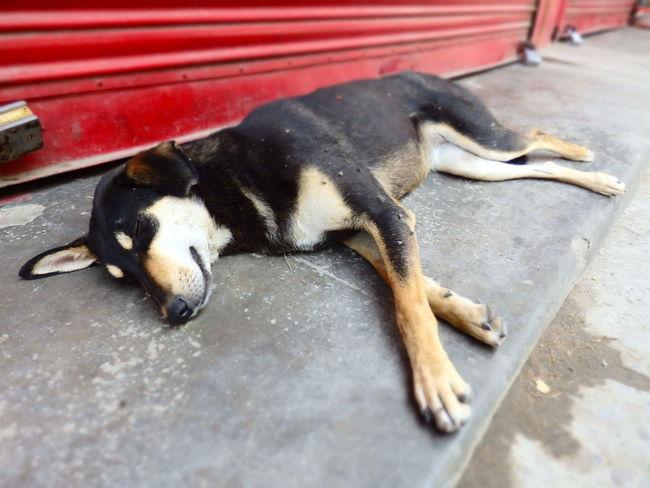 India LaxmanJhula Road Animal Themes Dog One Animal Rishikesh Sleeping Street Dog
