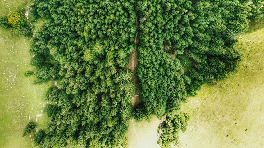 treescollection The Week on EyeEm aerial view Aerial Coniferous Forest Coniferous Tree Coniferous Forest Romania Woods Woods Woodstock Aerial Woods Treescollection Aerial View Aerial Landscape Tree Area Green Color Textured  Green Evergreen Tree Pine Tree Pine Woodland Pine Wood Pinaceae