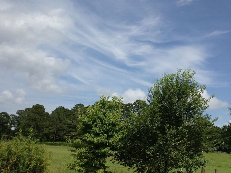 Cloudporn Landscape_Collection TreePorn Sky_collection