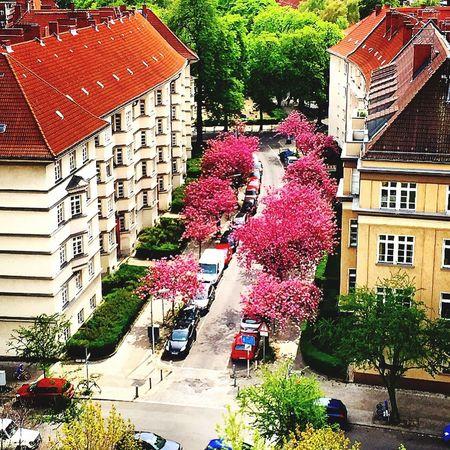 _Springtime in Berlin/Friedenau Spring Berlinstagram Frühlingsgefühle Berlin Iphone6photography Instaberlin BestPlaceToBe EyeEm Gallery Springtime Flowers