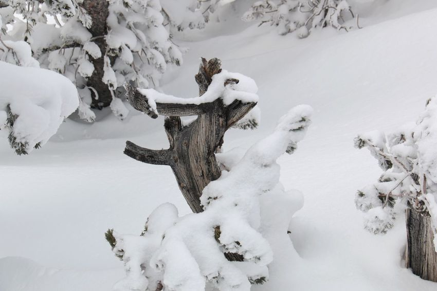 Winter Wonderland ❄ White Color Winter Tree South Lake Tahoe Outdoors Cold Temperature Heavenly Ski Resort Beauty In Nature Tranquil Scene Sierra Nevada Mountains