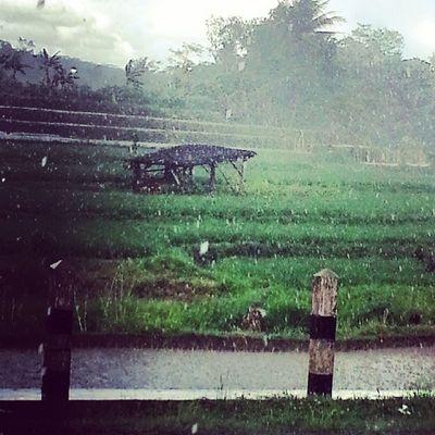 Alone Rain Green Java Counyltry Instagood Like4like