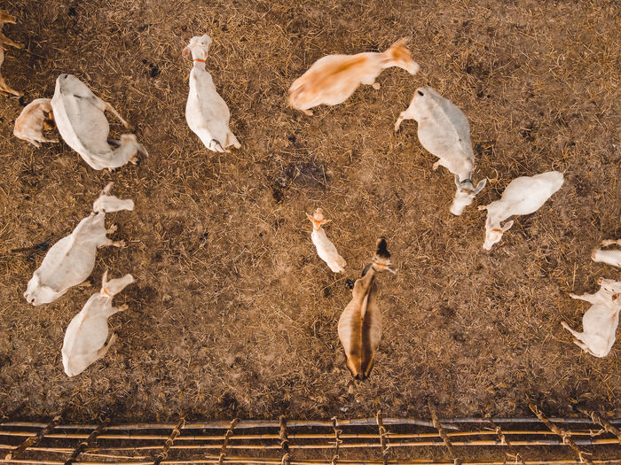 High angle view of birds in farm