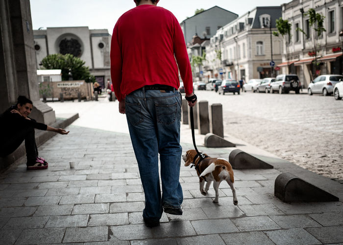 Dog on footpath in city