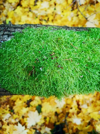 Horizontal Lines Patterns In Nature Patterns & Textures Clear Green Focus On Foreground Yellow Leaves Background Green Moss Green Moss On Tree Close Up Field Close-up Grass Plant Green Color Moss Fall Leaves