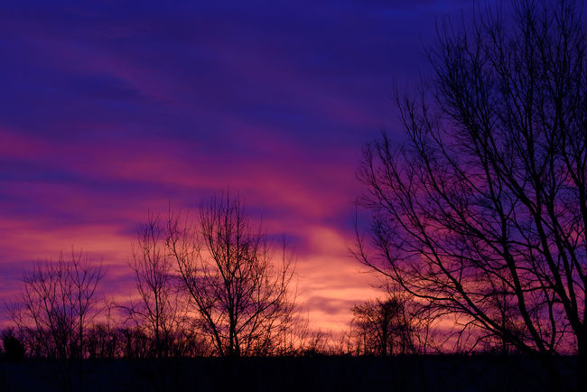 Evening colorful silhouette Calm Landscape_Collection Nature Nightphotography Twilight Bare Tree Beauty In Nature Branch Cloud - Sky Colorful Dusk Field Landscape Nature Night No People Orange Color Outdoors Scenics Silhouette Sky Sunset Tranquil Scene Tranquility Tree