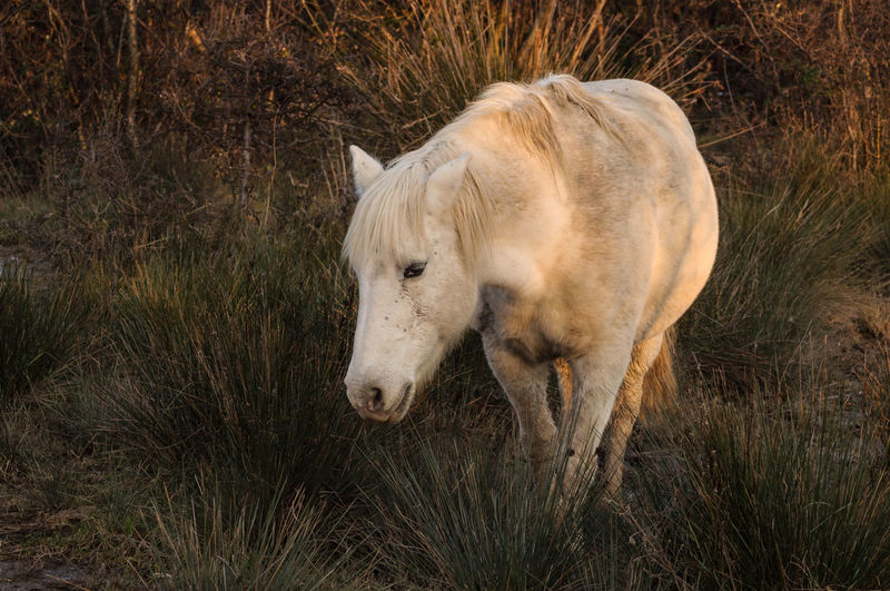 High angle view of horse standing on grassy field