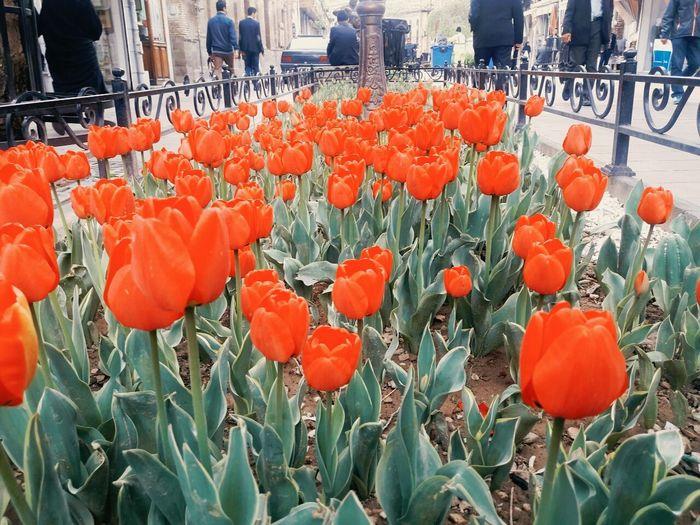 Tabriz City Tarbiat