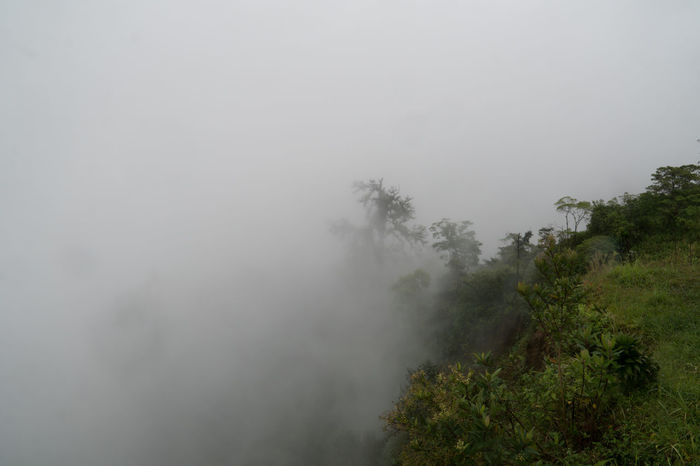Fog obscures rainforest near Poas, in Costa Rica Beauty In Nature Costa Rica Day Fog Foggy Forest Landscape Nature Nature Reserve No People Outdoors Pine Wood Rainforest Scenics Sky Tranquility Tree Weather Winter