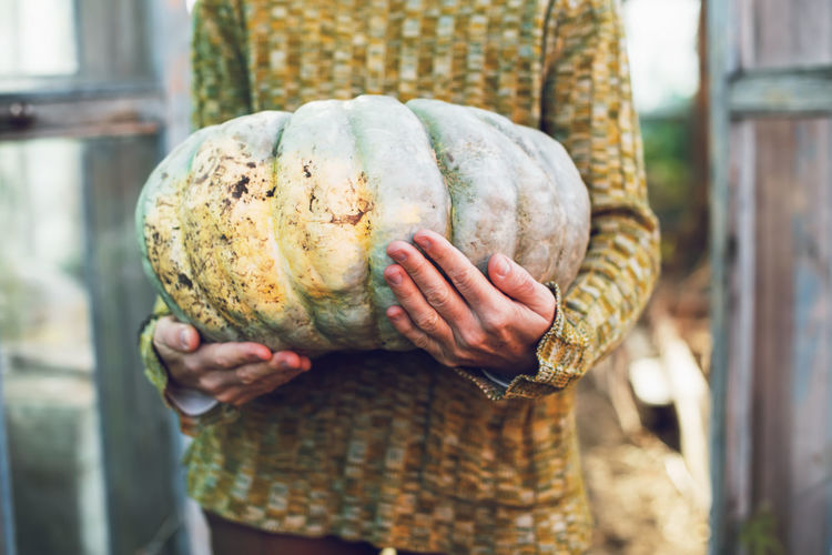 Young woman holding in hands big pumpkin crop yields collected from garden. thanksgiving preparation