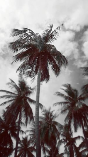 . .always stand out from the crowd Treescollection Tree_collection  Trees And Sky Tree And Sky Poster Winter Branches Trees Trees And Sky Palm Palm Tree Palm Trees Monochrome Black And White Sky Branch Beauty In Nature Outdoors Low Angle View Tree No People Nature Day Close-up Growth