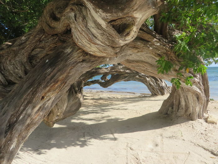 Archway Beach Beauty In Nature Close-up Contorted Day Growth Mexico Natural Beauty Nature No People Non-urban Scene Outdoors Part Of Pattern Scenics Tree Tree Trunk Twisted