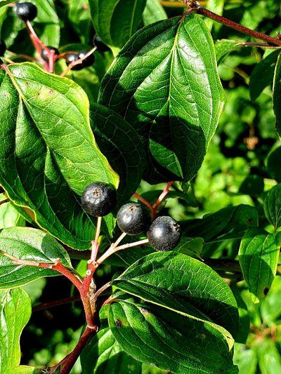 """ Berries """