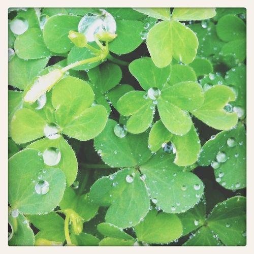 Green EyeEm Nature Lover