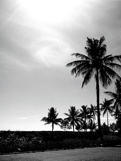 Black And White Photography Black And White Tree Palm Trees Nature Photography Nature Photography Portrait Photography EyeEm EyeEm Best Shots - Black + White Eyeem Philippines Pamplona, Cagayan, Philippines