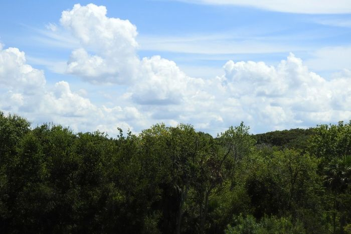 Beautiful Blue Sky☁ Cloudscape Above The Trees Treetops Picturesque Scenic View Photography