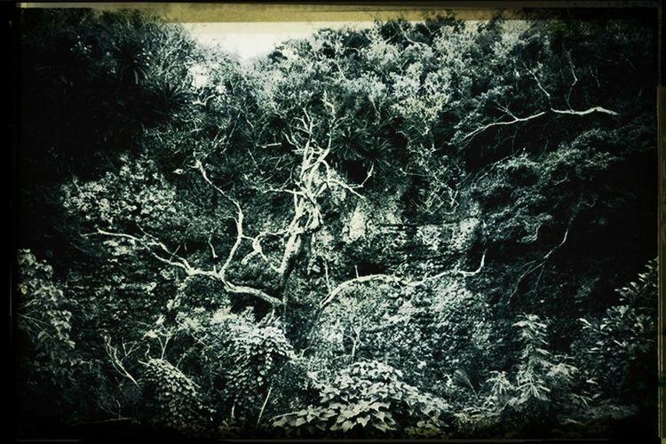 Green Monochrome Photo EyeEm Nature Lover