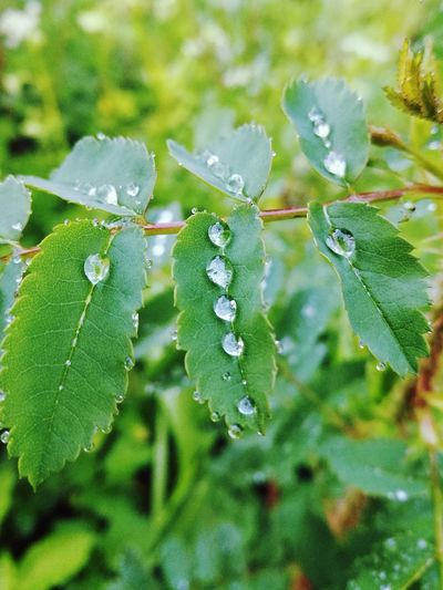 After The Rain Leaves Nature Water Outdoors Summer Rain Drop