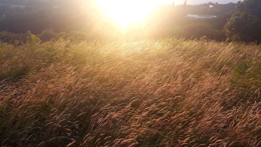 43 Golden Moments Grass Red Grass Sunset Nature Outdoors Illuminated Brightsun Dramatic Sky