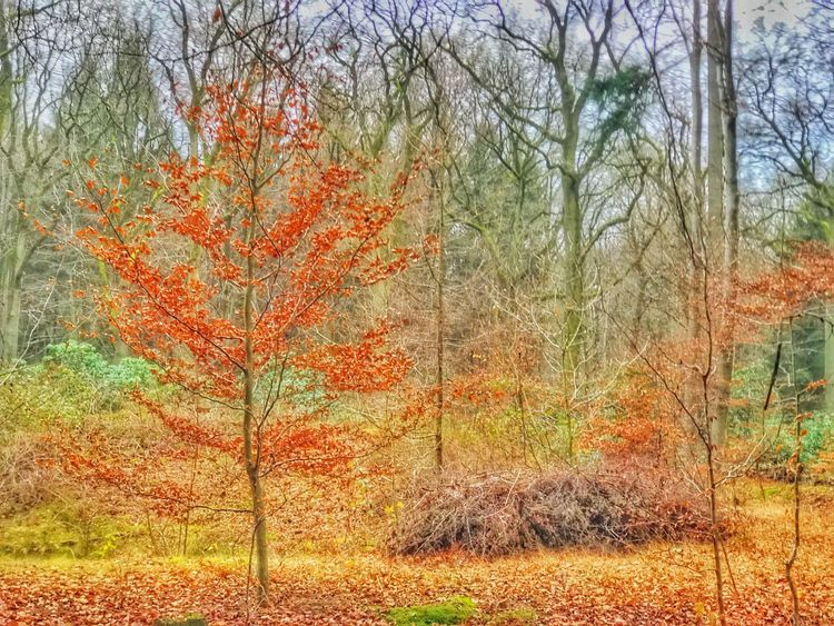 Plant Tree Nature Autumn Change Growth Orange Color Tranquility Beauty In Nature Red Day Non-urban Scene Tranquil Scene Branch No People Outdoors Grass Close-up Fineart Tree_collection  Lights And Shadows Taking Photos Getting Inspired EyeEm The Best Shots Caught The Moment