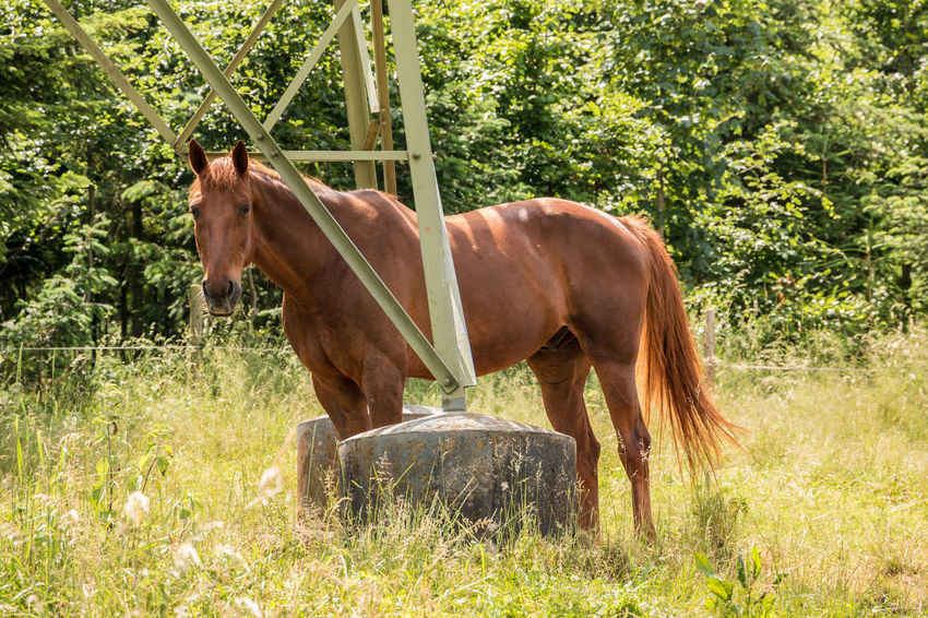 Horses on the green meadow Animal Animal Themes Animal Wildlife Day Domestic Domestic Animals Field Grass Herbivorous Horse Land Livestock Mammal Nature No People One Animal Outdoors Pets Plant Standing Tree Vertebrate