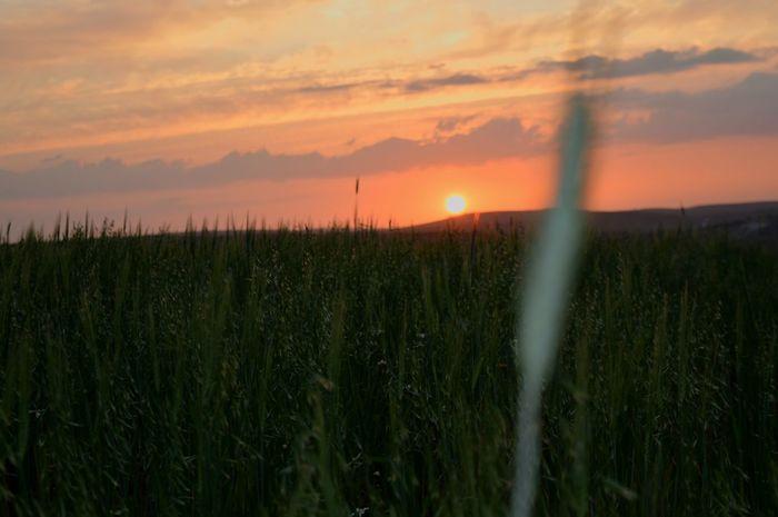 🌄 Sunset Red Orange Horizon Grass Field Clouds Sky Freedom Nolimits