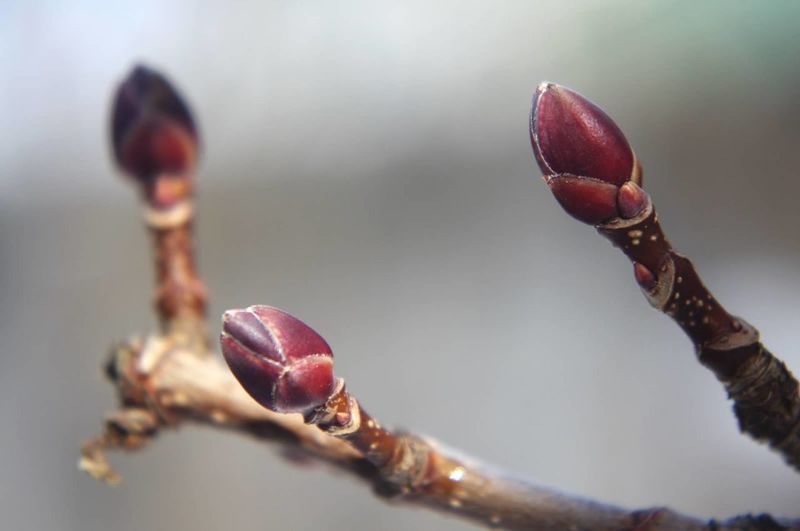 Close-Up Of Flower Buds Growing On Tree