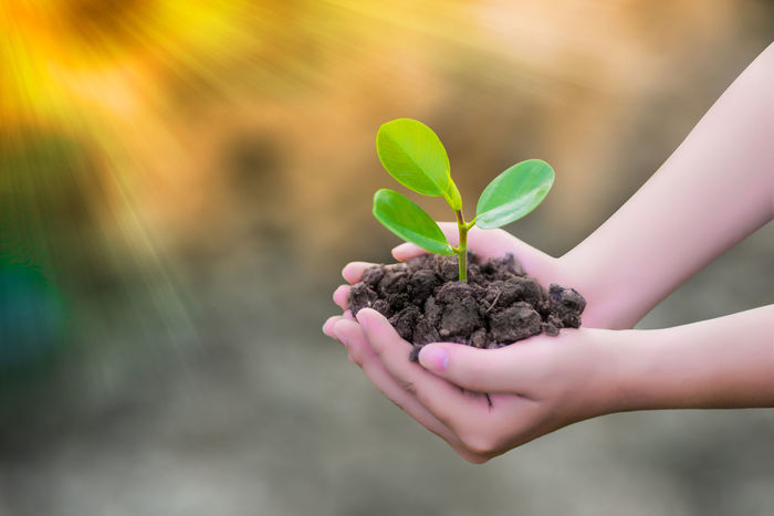 Beauty In Nature Beginnings Care Close-up Day Dirt Finger Focus On Foreground Gardening Green Color Growth Hand Holding Human Body Part Human Hand Leaf Lifestyles Nature One Person Outdoors Plant Plant Part Real People Sapling Tree Vulnerability