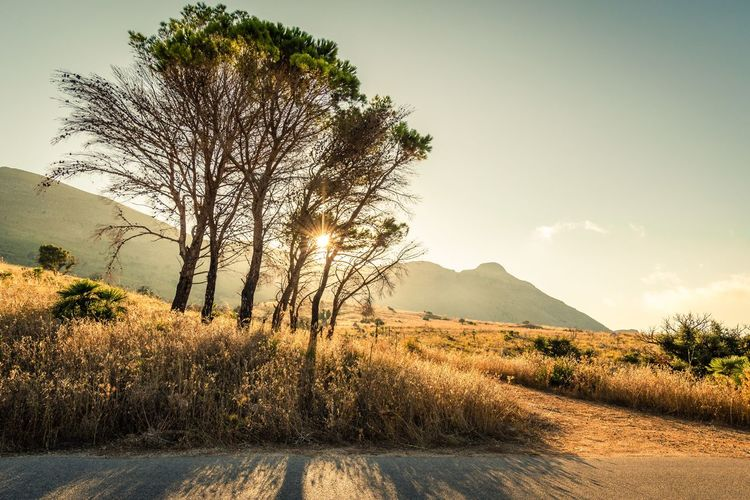El camino. Nikonitalia Nikon Nikond7200 Colors Panorama Amazingplaces Summer Picoftheday Italia Sicilia Colorful Tree Mountain Pixelated Sky Landscape Tranquility Sunset Scenics Non-urban Scene Calm Orange Color Tranquil Scene Single Tree