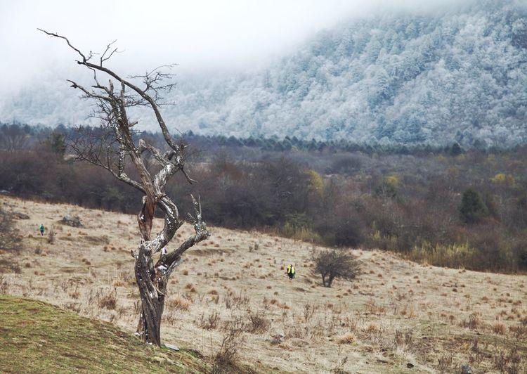 Tree on landscape