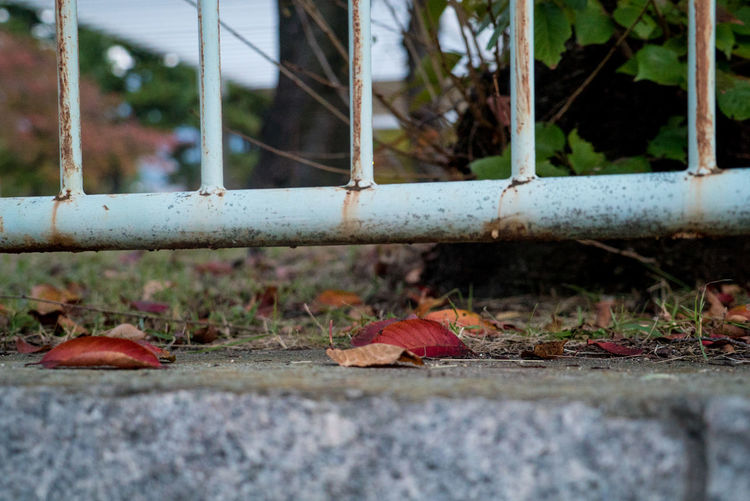 Streetphotography Street Day No People Selective Focus Nature Metal Leaf Outdoors Plant Part Close-up Boundary Railing Fence Barrier Dry Focus On Foreground Rusty Falling Autumn Security Plant Change Leaves Surface Level