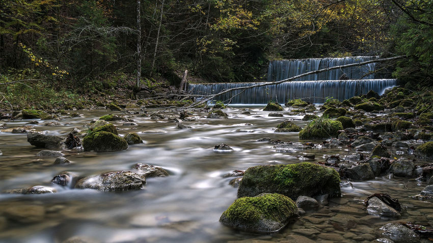 Tree Nature Water Green Color Growth No People Beauty In Nature Outdoors Day Freshness EyeEmNewHere Still Life Hiking Landscape Germany Forest Tranquility Beauty In Nature Power In Nature Waterfall Wanderlust Long Exposure Longexposure Nature Photography Scenics