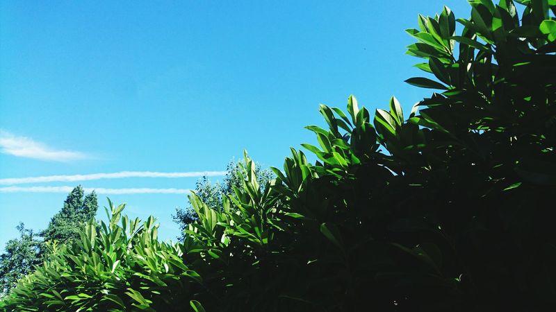 Chaleur Summer Warm Day Farniente Blue Sky GREEN LIFE