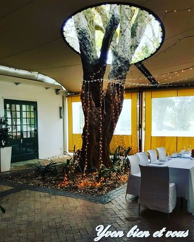 restaurant atypique Restaurant South Africa Tree Atypical Place View Trip Voyage Nature Yvonbien Funny Indoors  Window Day