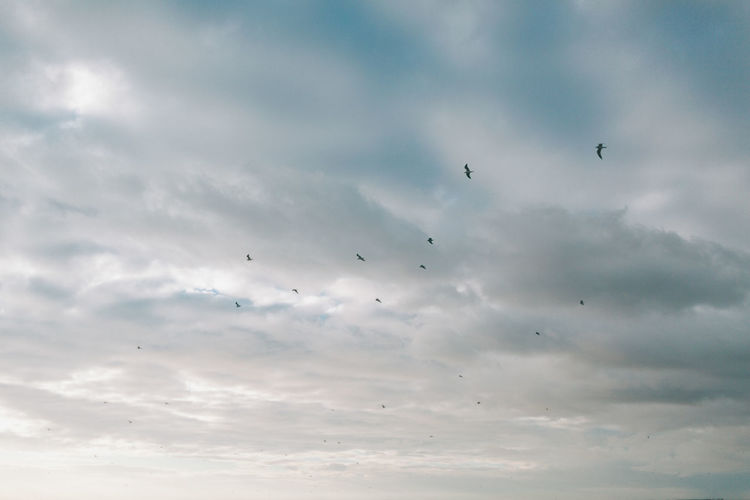 A flock of birds flying in a cloudy sky. Cloud - Sky Sky Flying Bird Beauty In Nature Nature Scenics - Nature Outdoors Flock Of Birds Tranquil Scene