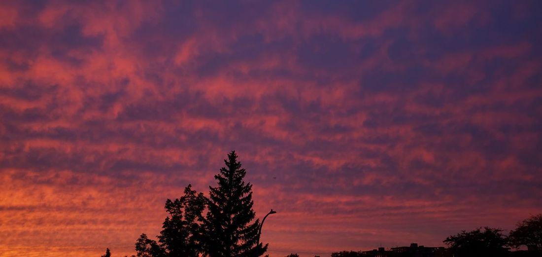 Superb Sky