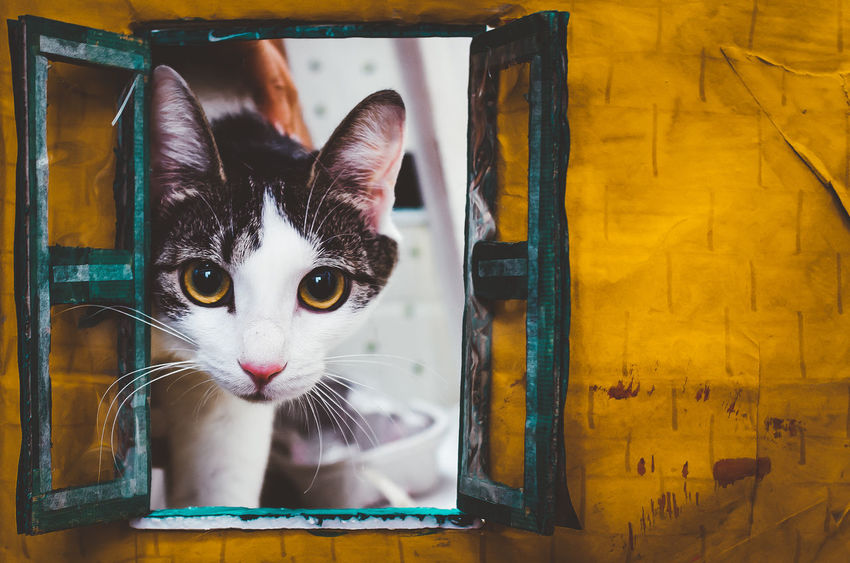 Cat Day Domestic Domestic Animals Domestic Cat Feline Indoors  Looking Looking At Camera Mammal No People One Animal Pets Portrait Vertebrate Whisker