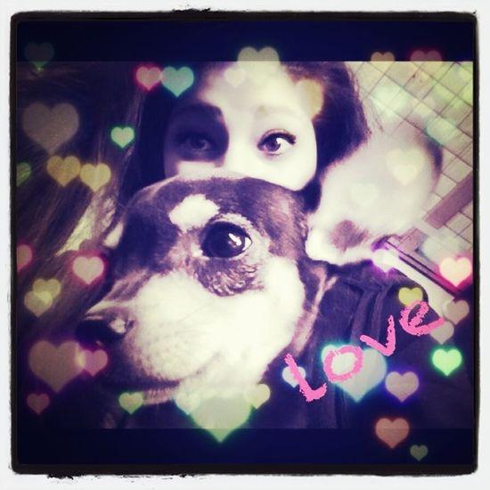 #dog #cute #me #crazy #face #love #sweet #hihi #proud #kiss x