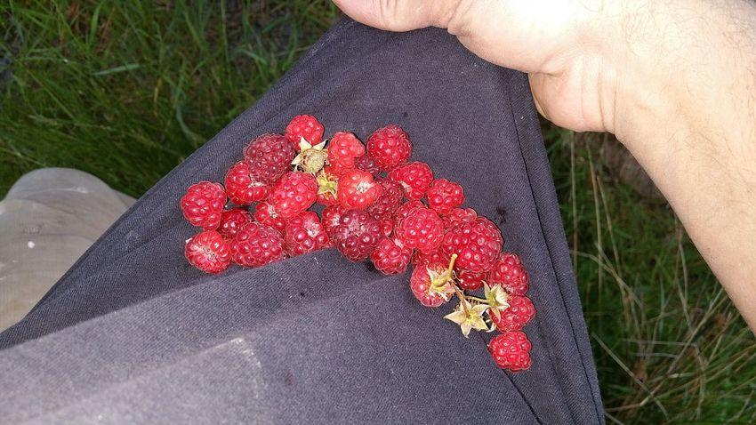 Raspberries in dirty t-shirt, mmmn Enjoying Life