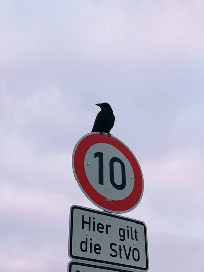 Crow Bird Sky Communication Cloud - Sky Sign Low Angle View Number Road Sign No People Speed Limit Sign Information Information Sign Outdoors
