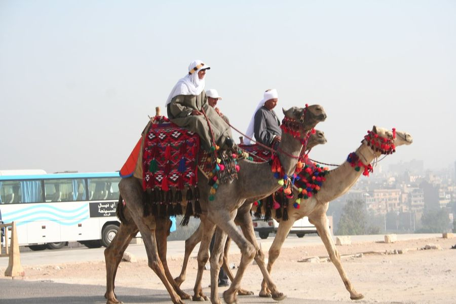 Animal Animal Themes Camel Camellia Camels Domestic Animals Egypt Enjoyment Friendship Full Length Fun Horse Livestock Mammal Men One Animal Recreational Pursuit Side View Standing Togetherness Two Animals Working Animal Zoology