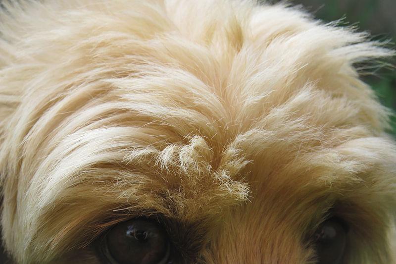 Details dog Dog Close-up Macro Photography Macro Portrait Full Frame Backgrounds Close-up Vision Glasses Iris Eyesight Optometrist Whisker